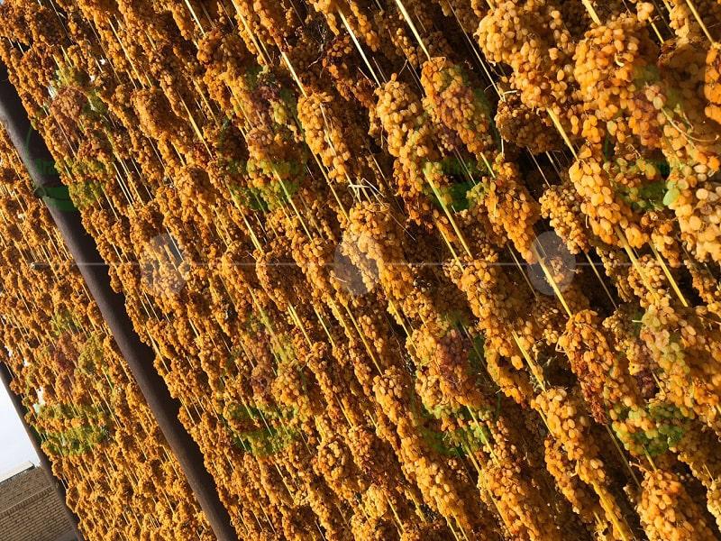 golden raisin sale
